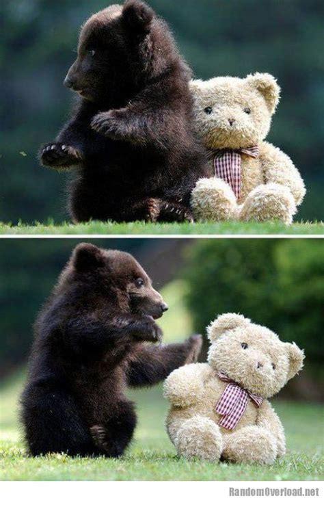 baby grizzly bear  teddy bear randomoverload