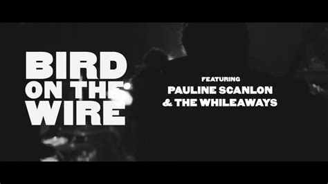 Listen to birds on a wire by feuillage, 2 shazams. Bird on the Wire: The Songs of Leonard Cohen trailer - YouTube