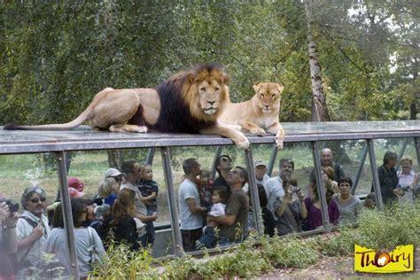 chambres d hotes essonne zoo parc zoologique de thoiry