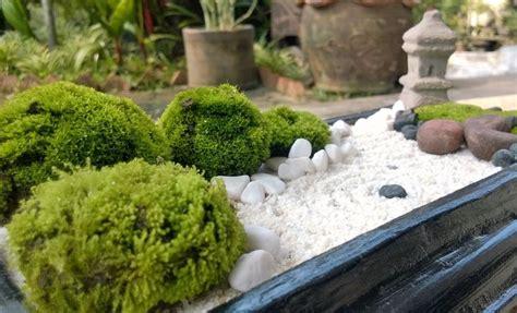 Zen Garten Miniatur by White Sand Mini Zen Garden Diy Garden Zen Japanese