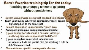 How to housetrain your puppy so much petential for How to train your dog to pee