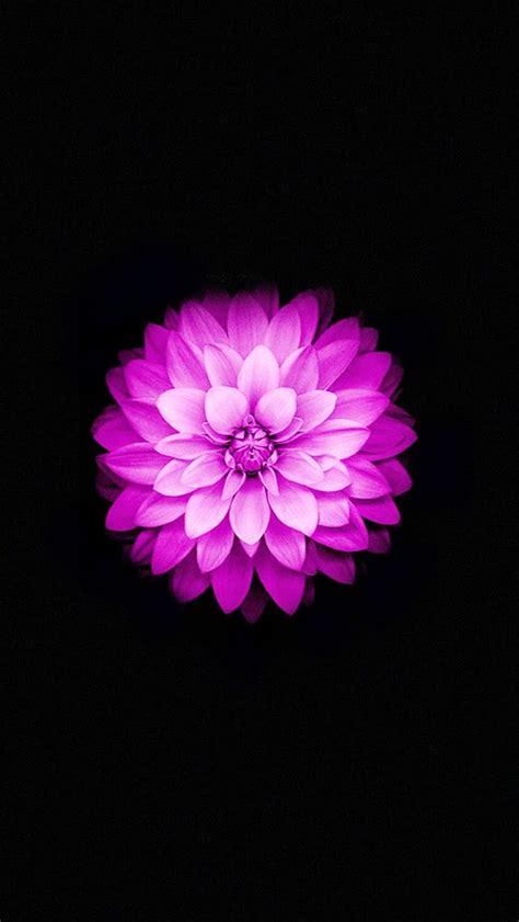 ios  flower wallpaper  wallpapersafari