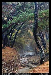 Picture/Photo: Stream flowing over terraces, Mt Namsan ...