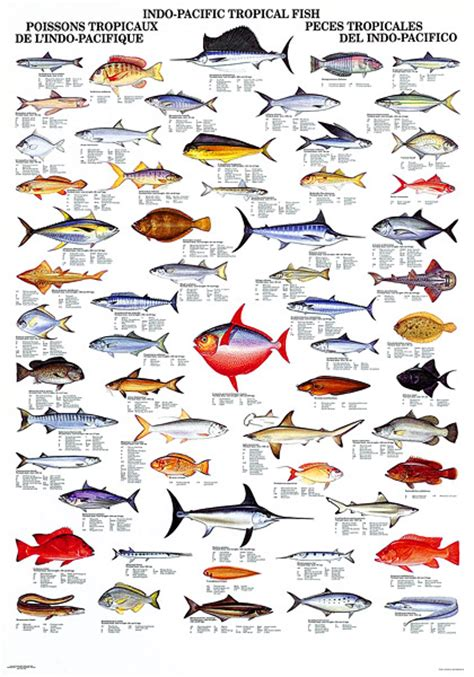gallery  data recalc dims fish chart pacific fish