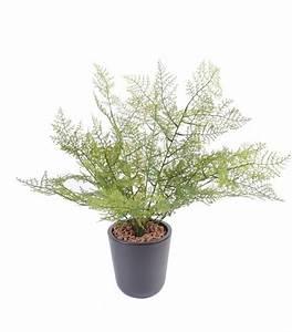 Plante Artificielle Asparagus Plastique Intrieur