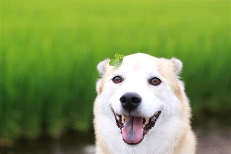 犬 の お腹 が キュルキュル 鳴る