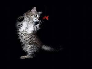 Bilder, Von, Katze, Tiere, Schwarzer, Hintergrund