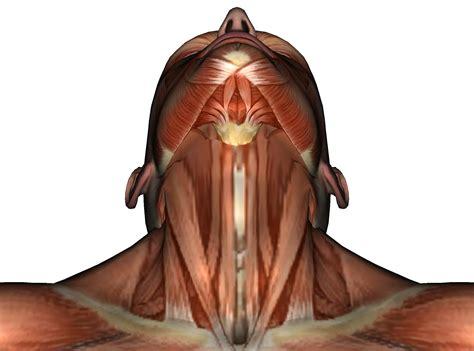 Massage, Massage Videos, Massage