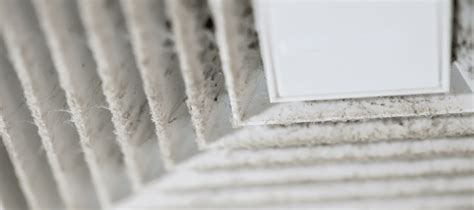 mold  air vents harmful    worry