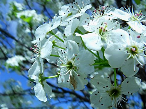 flowered tree flowering trees archives 3 quarters today