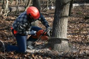 Man Cutting Down Tree