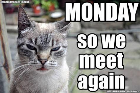 Monday Cat Meme - happy monday a story dream