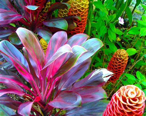 tropical plants of hawaii hawaiian tropical plants bing images