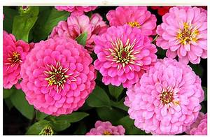 26 Types of Pink Flowers: Tips + Pictures - ProFlowers Blog