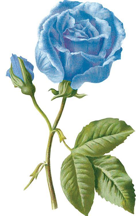elisia bloemen elisa s creations blauw 31