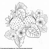 Strawberry Coloring Sheet Getcoloringpages Tag Uncategorized sketch template
