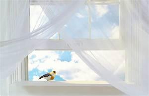 Viele Fliegen Am Fenster : vogel fliegt gegen fenster was kann man dagegen tun ~ Orissabook.com Haus und Dekorationen
