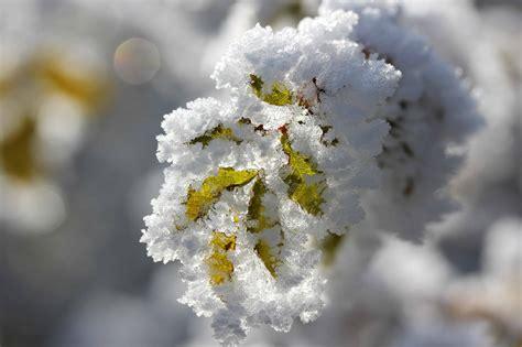 image libre flocon de neige macro detail neige arbre