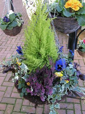 winter hanging basket heather ivy pansies upcycle