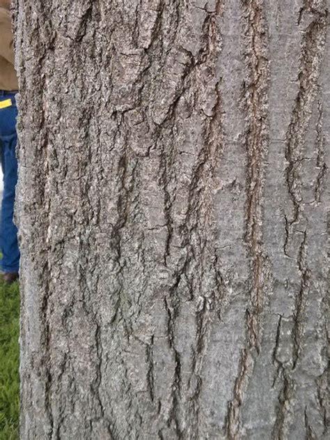 basic tree tree identification regional  community