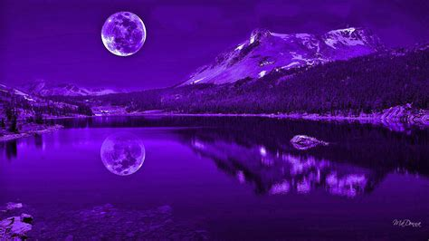 Purple Nights Reflection Wallpaper Other Wallpaper Better