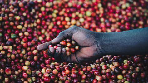 Rwanda has five distinct producing regions. Rwandan Coffee Farming Communities | Ruhango Region