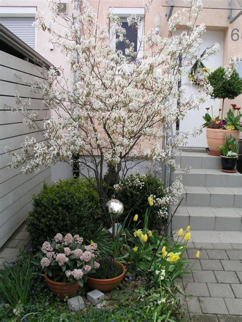 Kleine Sträucher Vorgarten by Felsenbirne Garten Garten B 228 Ume Garten