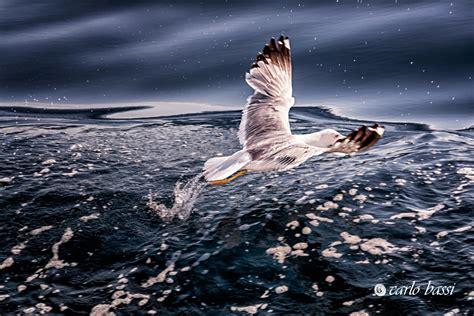 Il Gabbiano - il gabbiano juzaphoto