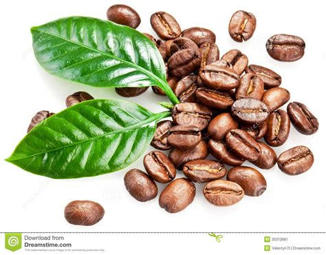 Roasted Coffee Beans And Leaves. Stock Image Coffee Filter Pictures Barista Funny And Quotes Kicking Horse In A Can Twitter Sale Kelowna Desk Wallpaper For Windows 10