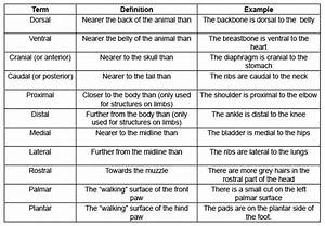 9 Best Images Of Horse Terms Worksheet