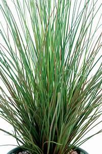 Plante Suspendue Exterieur