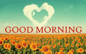 sunflower good morning wishes images photo pics