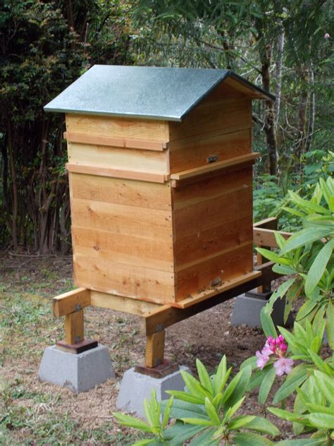 perone hive adventures  natural beekeeping