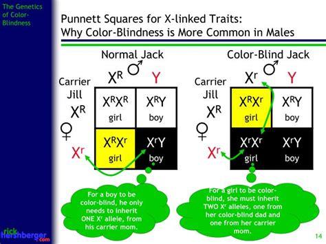 color blindness genetics color blindness punnett square www imgkid the