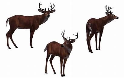 Deer Buck Hunter Transparent Silhouette Wayne Pluspng