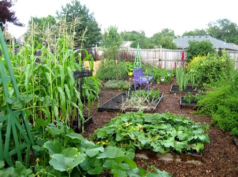 Secrets To Have A Productive Vegetable Garden Best Tips