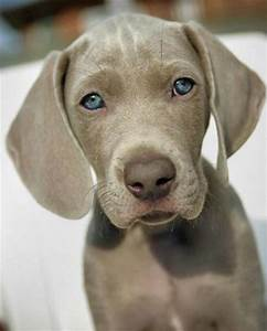 Animal - Best Dog: a collection of Animals and pets ideas ...