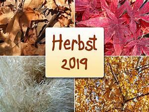 Kostenlose Bilder Herbst : herbst 2018 108 kostenloses herbstbild ~ Yasmunasinghe.com Haus und Dekorationen