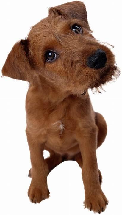 Dogs Dog Pngimg