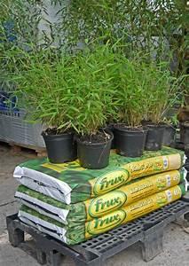 Volumenanteil Berechnen : zahlung und versand bambuswald bambus und pflanzenshop f r haus und garten ~ Themetempest.com Abrechnung