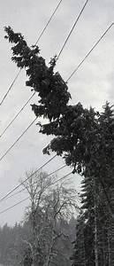 Stromleitung Finden App : schneefall sorgt f r stromausfall st blasien badische ~ Lizthompson.info Haus und Dekorationen