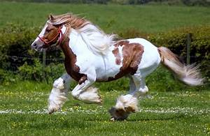 10 Most Beautiful Horses in The World ~ Explore Amazing World