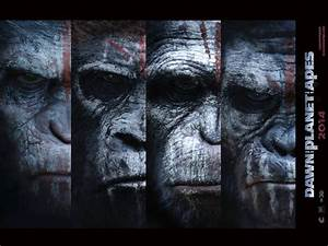 Dawn of the Planet of the Apes Movie Wallpapers ...