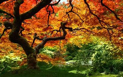 Autumn Leaves Wallpapers Natural Pc Cool