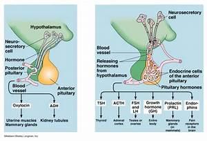 Jefferson Crna Program Notes  Phys  Endocrine