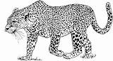 Leopard Coloring Pages Animals Spotted sketch template