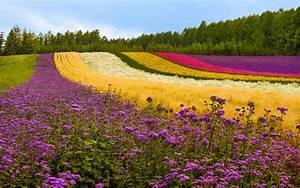 Garden Flower HD Wallpapers