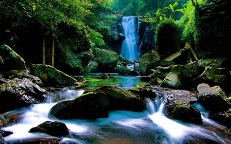 Animated Forest Wallpaper - forest waterfall wallpapers wallpaper cave