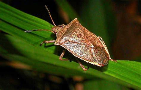 Garden Bug guide to beneficial bugs for the garden