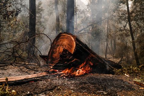 California wildfires burn 771,000 acres in one week, killing 5 and degrading air quality. California's Big Basin Redwoods Severely Damaged by Fires ...